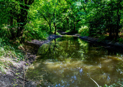 Domaine de la Martinière - Dans les bois